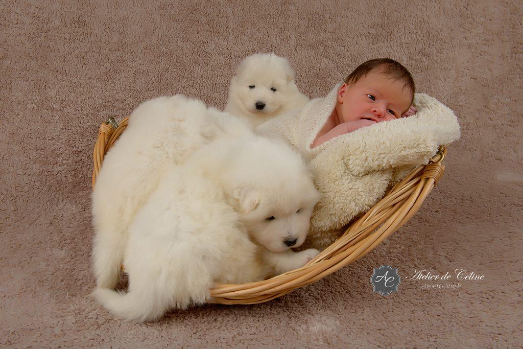 Séance New Born, bébé, chiens, studio, famille, naissance (4)
