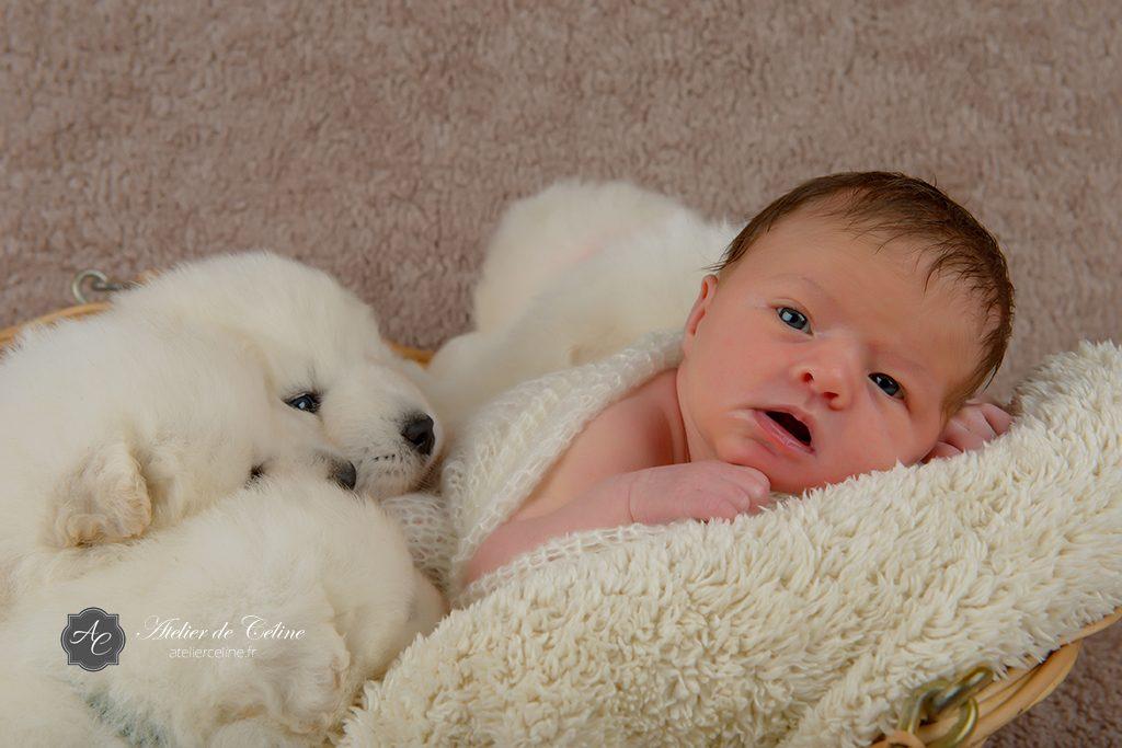 Séance New Born, bébé, chiens, studio, famille, naissance (3)