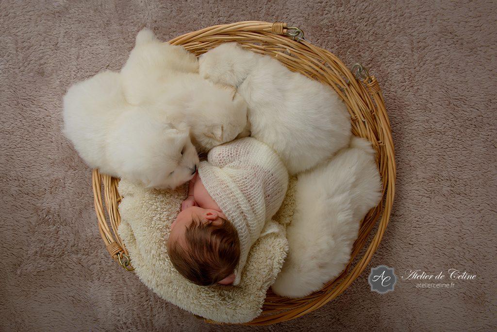 Séance New Born, bébé, chiens, studio, famille, naissance (2)